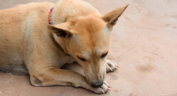 malattie zampe posteriori cani