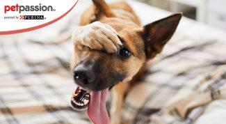 Nomi assurdi per cani