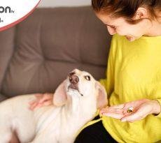 Pastiglie e pillole al cane