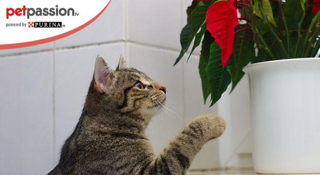 Piante velenose gatti tipologia