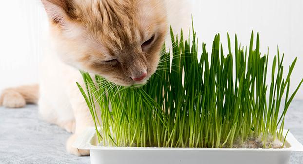 piante velenose gatti