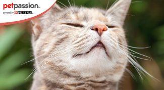 Quali odori infastidiscono i gatti?
