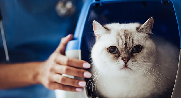 Portare il gatto dal veterinario