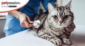 Stressa gatto dal veterinario