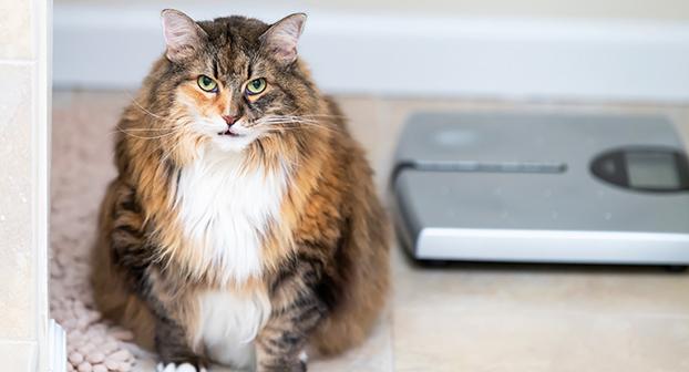 artrosi gatto cure