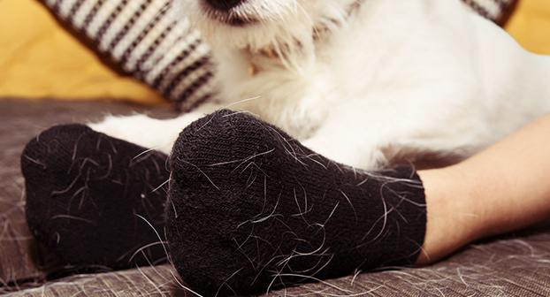 Perchè il cane perde il pelo?
