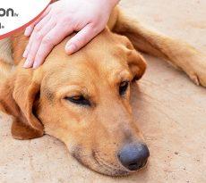 Comparsa di forfora nel cane