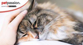 Sintomi e cura struvite gatto