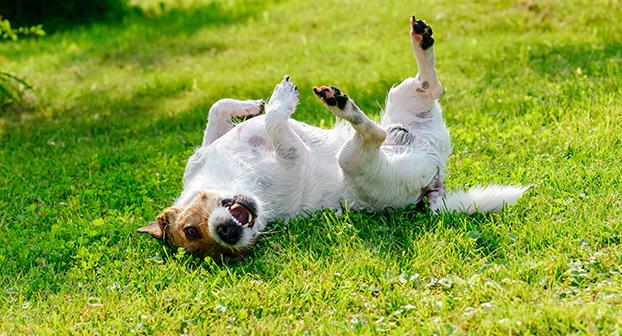 prurito cane motivi