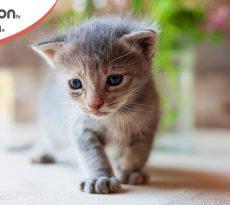 Perchè è come sverminare il gatto