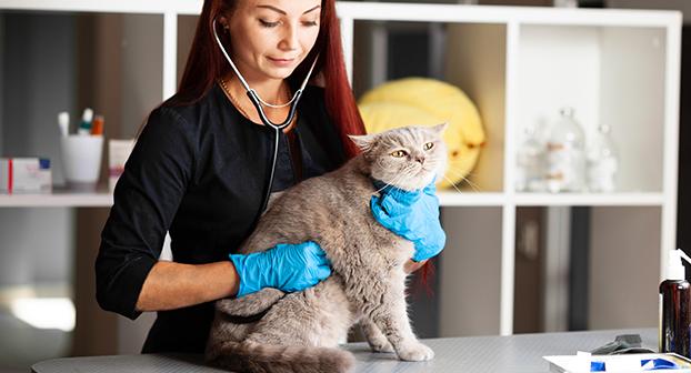 Come curare la diarrea del gatto?