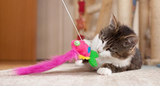 Cosa regalare a Natale al gatto
