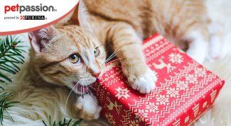 Scegliere il regalo di Natale per il gatto
