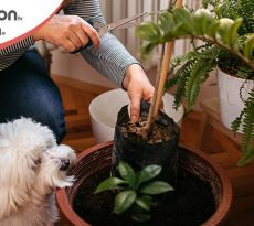 Piante velenose cane