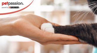 Polidattilia del gatto