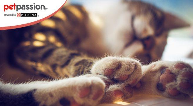dita dei gatti, come e quante sono
