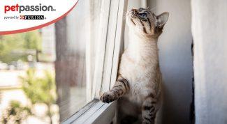 Gatto e sindrome vestibolare