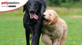 Convivenza tra due cani in calore