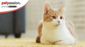 Crisi epilettiche gatto