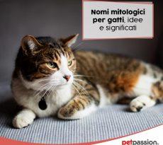 Nomi gatti