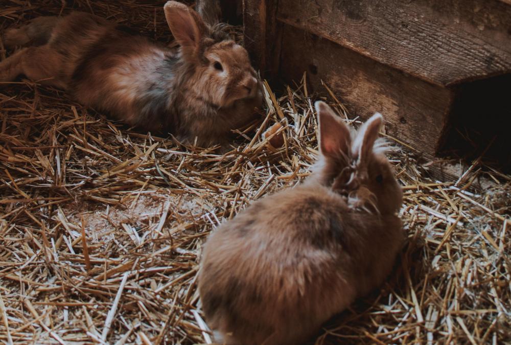 Gabbia coniglio nano fieno