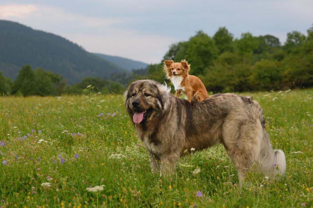 cani-da-record-il-più-piccolo-e-il-più-grande